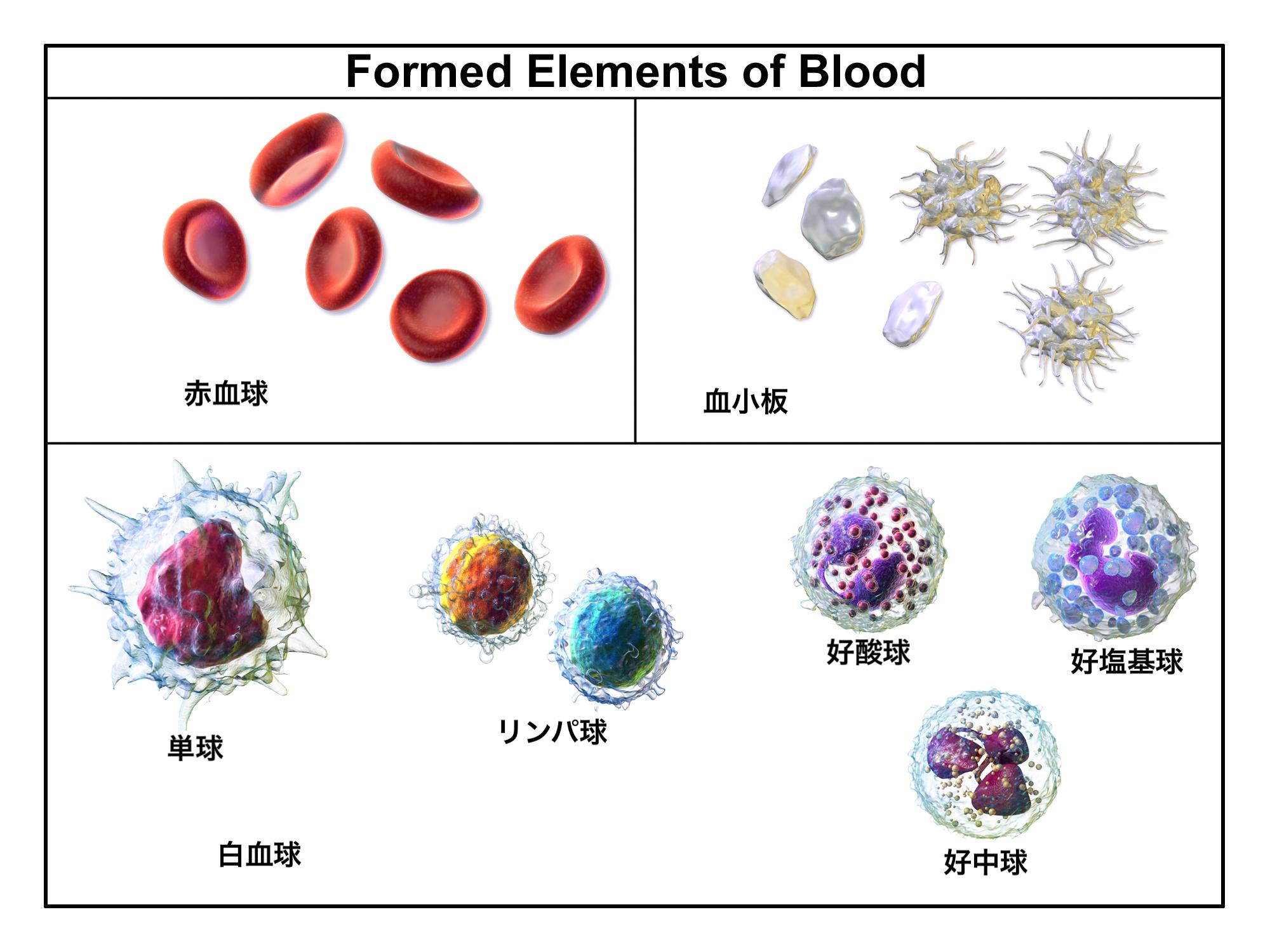 血球のイメージ